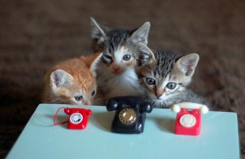 baby cats on baby cat phones